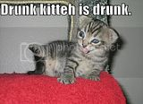 Th_funny-pictures-drunk-kitten